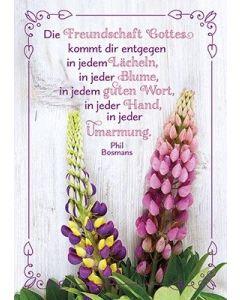 Postkarten: Die Freundschaft Gottes, 4 Stück