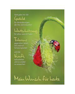 Postkarten: Mein Wunsch für heute, 12 Stück