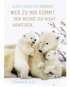 """Jahreslosung 2022 - Postkarten """"Eisbären"""" 12 Stück"""